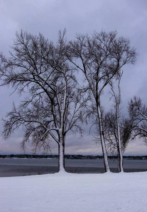 3 Winter Trees